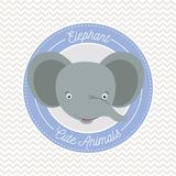 Irregular lines background with color frame decorative and face elephant cute animals text. Vector illustration Royalty Free Stock Photo