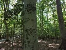 Irregular marks on tree trunk in the woods Stock Images