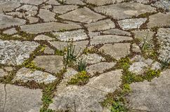 Irregular stones on a green roof. Roof terrace with irregular stone pavement alternated with patches of sedum and other vegetation Royalty Free Stock Image