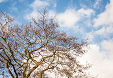 Irregularly shaped bare branches against the cloudy sky. Whimsically shaped leafless branches against the cloudy sky on a sunny day at the beginning of the Royalty Free Stock Photos