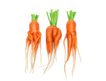 Irregularly shaped carrots close-up isolated on white background Royalty Free Stock Photos