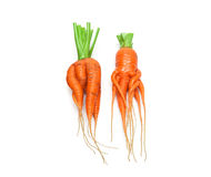 Irregularly shaped carrots isolated on white background Royalty Free Stock Photo