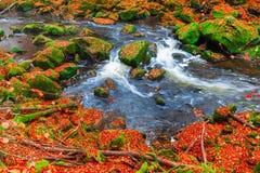 Irrel каскадирует на реке Pruem в Eifel, Германии стоковые изображения