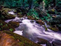 Irreler vattenfall i den Eifel naturreserven arkivfoto