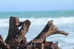 Irreversibly alone. Wooden part on seashore, dhanushkodi rameshwaram Stock Images