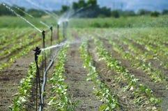 Irrigação fotos de stock