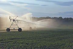 irrigação Imagens de Stock Royalty Free
