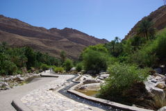 Irrigação antiga em Omã imagens de stock royalty free