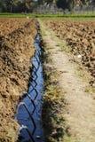 Irrigação de gotejamento em uma exploração agrícola imagens de stock royalty free