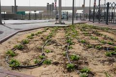 Irrigação de gotejamento na cidade de Dubai, Emiratos Árabes Unidos fotos de stock royalty free