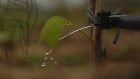Irrigação de gotejamento Volume de água de uma torneira a um rebento fotografia de stock