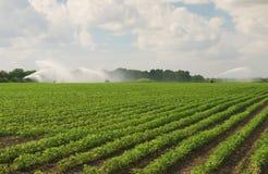 Irrigação do campo Imagens de Stock
