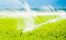 Irrigação do campo de exploração agrícola Fotos de Stock