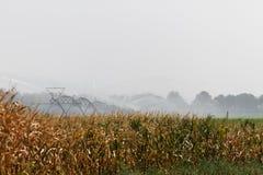 Irrigação do campo de milho Imagens de Stock Royalty Free
