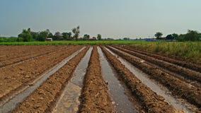 Irrigação do sulco na produção de colheitas fotografia de stock royalty free