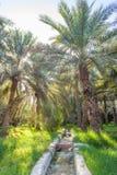 Irrigação em Jimi Oasis em Al Ain, UAE fotografia de stock