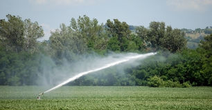 Irrigação em um campo de trigo imagem de stock