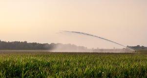 Irrigação no campo de milho Imagens de Stock