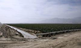 Irrigação, vegetação, agricultura Fotos de Stock