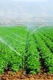 Irrigación Foto de archivo libre de regalías
