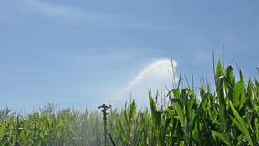 irrigación almacen de video