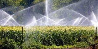Irrigación de la cosecha. Fotos de archivo libres de regalías