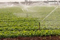 Irrigación de regadera Fotos de archivo