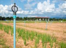 Irrigación de regadera para el campo de la agricultura en país en vías de desarrollo fotografía de archivo libre de regalías