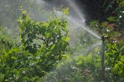 Irrigación de un cultivo de las patatas fotografía de archivo