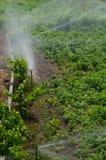 Irrigación de un cultivo de las patatas foto de archivo