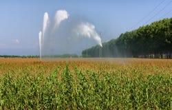 Irrigación del campo de maíz Foto de archivo libre de regalías