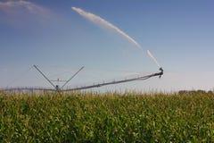 Irrigación del campo de maíz Fotos de archivo