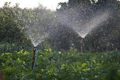 Irrigación del campo del cultivo Fotos de archivo libres de regalías