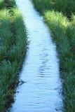 Irrigación del trigo Fotografía de archivo libre de regalías