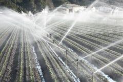 Irrigación en un campo Imagen de archivo libre de regalías