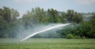 Irrigación en un campo de trigo Imagen de archivo
