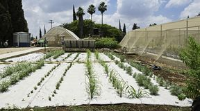 Irrigación por y High Tech goteo que cubren con pajote en Herb Garden experimental en Israel fotografía de archivo libre de regalías