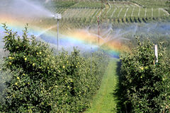 Irrigação de um pomar de maçã em Italy quente Fotos de Stock Royalty Free