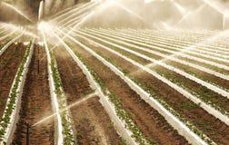 Irrigate field. Automatic irrigation on a field Stock Photo