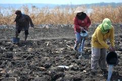 Irrigate the fields Stock Photo