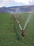 Irrigated Alfalfa Royalty Free Stock Photo