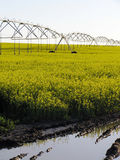 Irrigated Canola Field. Canola field & irrigation system equipment Stock Photography