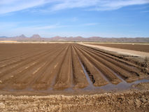 Irrigated farmland Royalty Free Stock Images