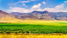 Irrigated farmlands along the Trans Canada Highway between Kamloops and Cache Creek. In central British Columbia, Canada Royalty Free Stock Image