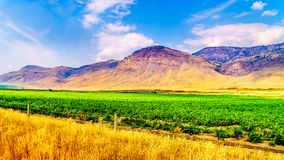 Irrigated farmlands along the Trans Canada Highway between Kamloops and Cache Creek. In central British Columbia, Canada Royalty Free Stock Photo