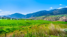 Irrigated fertile farmland along the Fraser River as it flows through the canyon to the town of Lillooet in the Chilcotin region. On British Columbia, Canada stock image