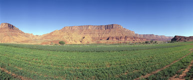 Irrigated field. Colorado River and Red Rock along Route 28, Utah Stock Images