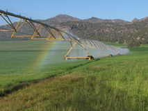 Irrigated hay field. Green hay field irrigated by circular spray irrigation system Royalty Free Stock Photography