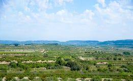 Irrigated lands Stock Photos