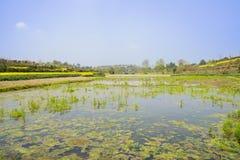 Irrigated lands in sunny spring. Chengdu,China Stock Image